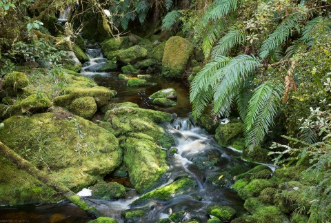 Oparara Basin Stream, West Coast,